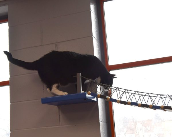 Montclair Township Animal Shelter Debuts Renovated Cat Rooms