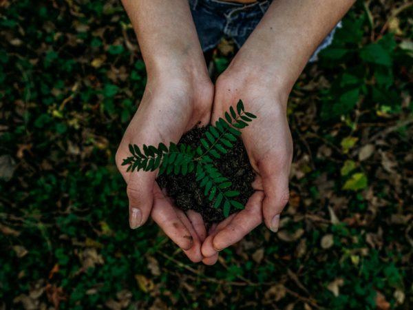 native tree seedlings